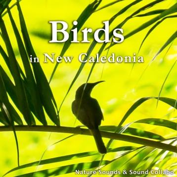 ニューカレドニアの小鳥のさえずり